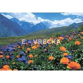 Antibakteriálna vôňa horská lúka 20g
